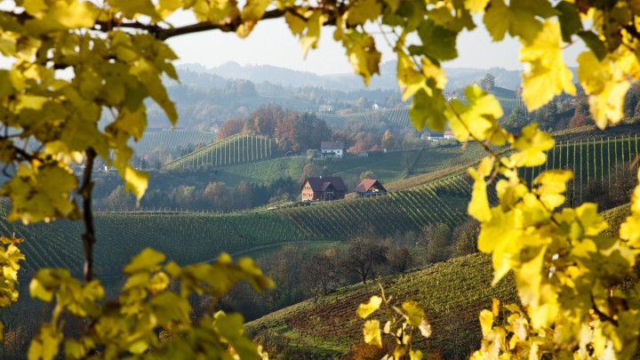 Vineyards, Austria