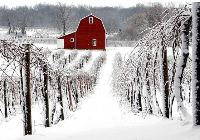 Wine Winter in Charlottesville USA