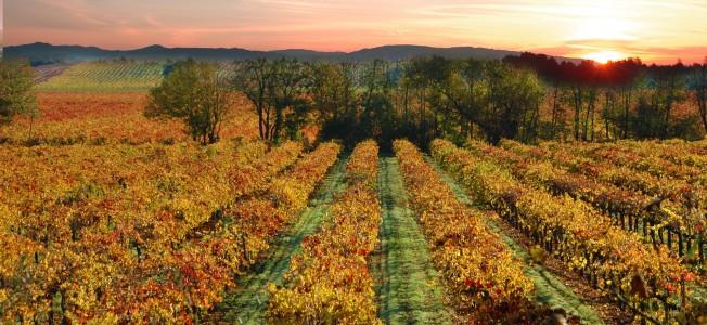 California vingård