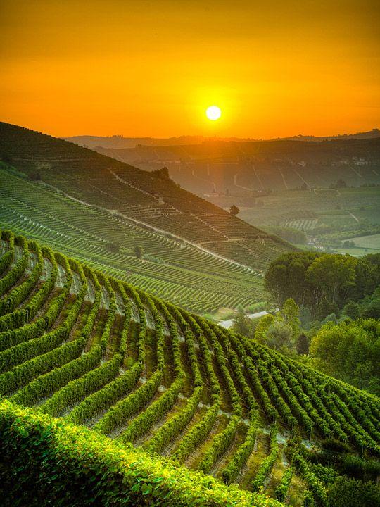 východ slunce nad vinohrady
