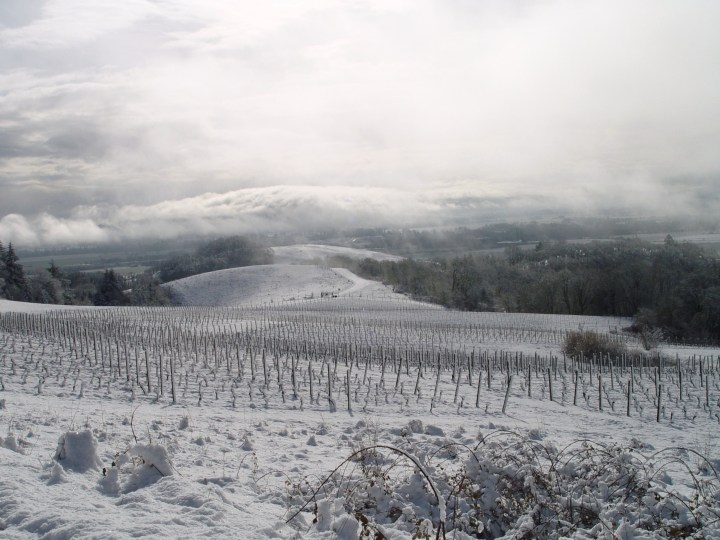Oregon USA Snow on wineyards