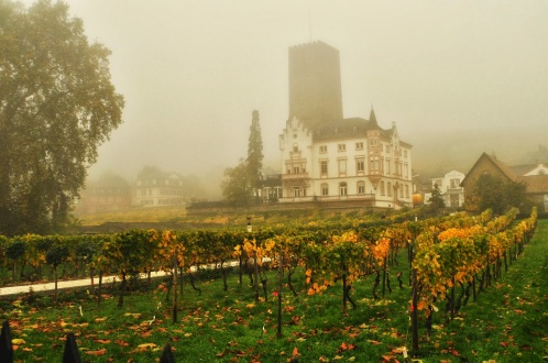 Taurus Mountain Rhine wine industry