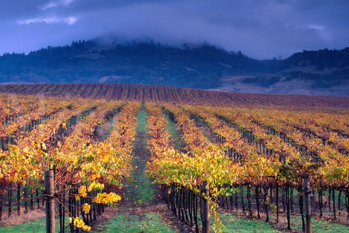 clouds over vineyard.jpg