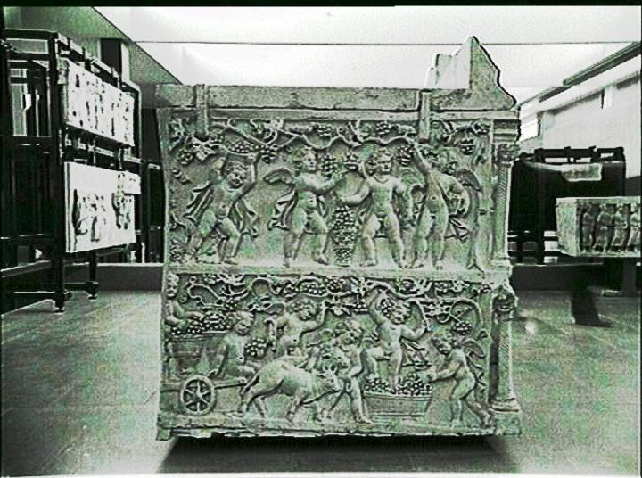 Sarcophagus of Junius Bassus butti harvesting grapes.JPG