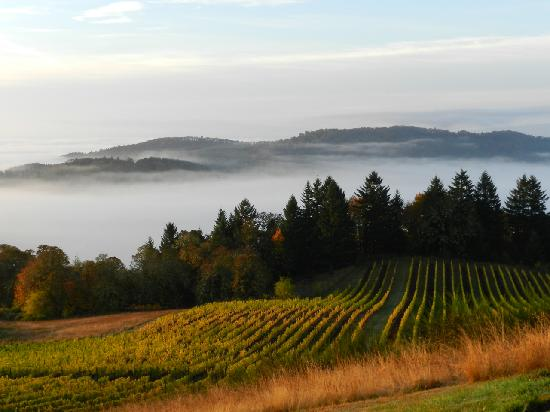 Youngberg Hill Vineyards.jpg