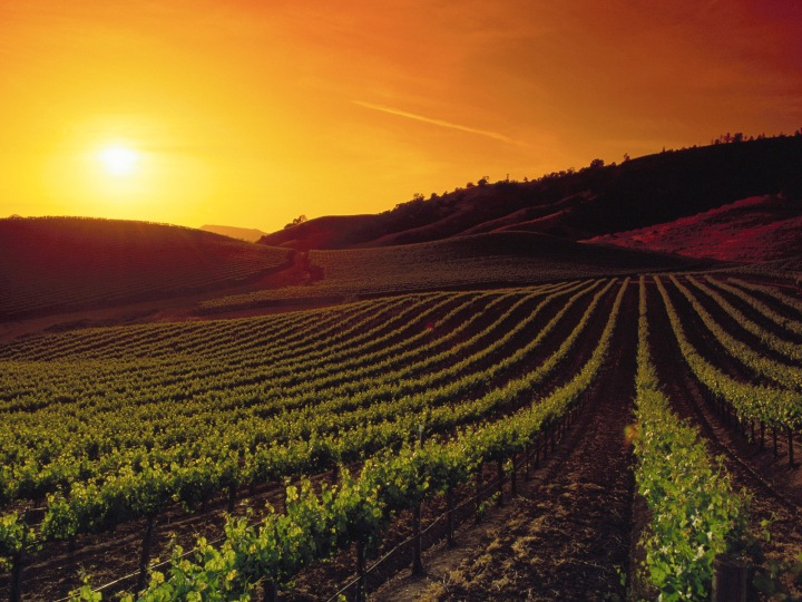 Sunset wine country california.jpg