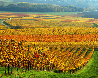 Rhine Germany vineyards.jpg