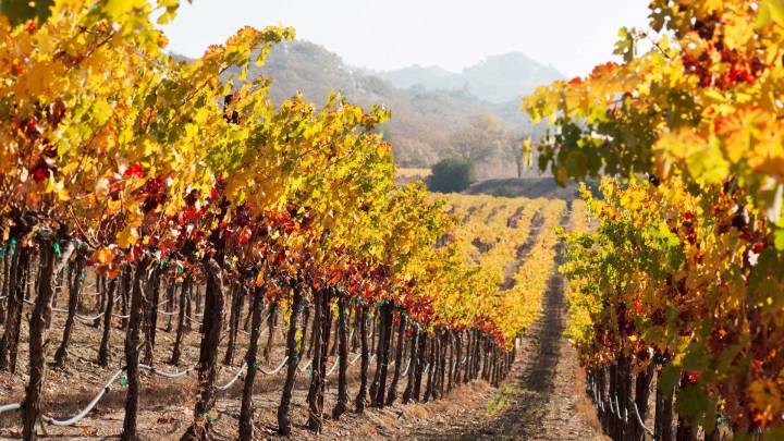 Vineyard in the Fall.jpg