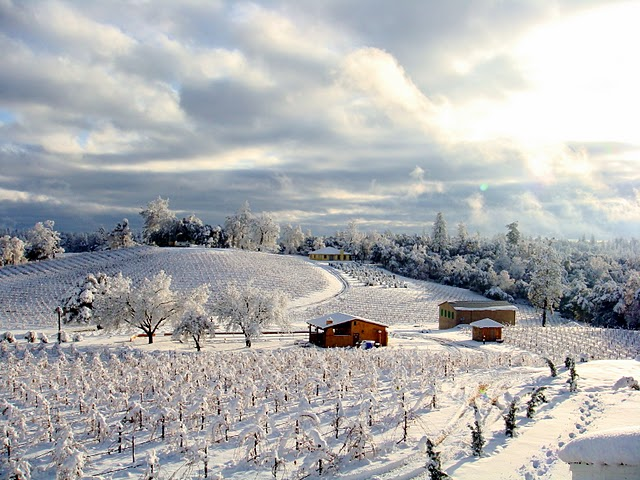 First Snow at Amador County Vineyard.JPG